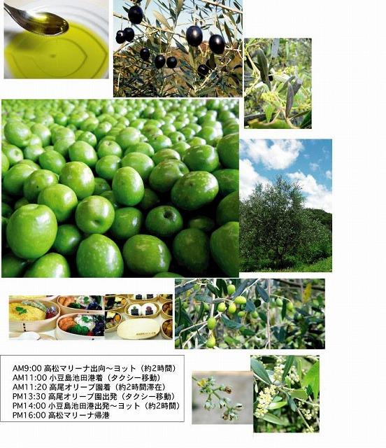 小豆島オリーブ収穫祭.jpg