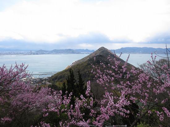 013桜.jpg